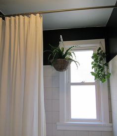 Hanging Plants and Tall Shower Curtain