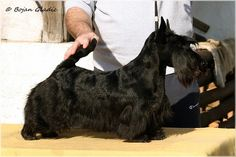 Invisible Touch Black Sapphire  8 months on pic Photo by Goran Gladic