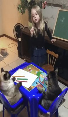 Cute Animal Videos, Funny Animal Pictures, Cute Funny Animals, Cute Baby Animals, Funny Cute, Animals And Pets, Funny Kids, Cute Kids, Cute Babies