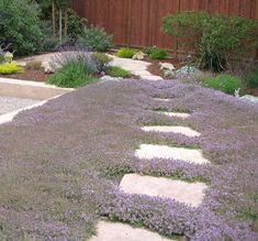 Astrid Gaiser Garden Design: Lilac Lawns – Or Why Water-Wise Rocks - Modern Desert Landscaping Backyard, Front Yard Landscaping, Landscaping Ideas, Landscape Design, Garden Design, Desert Landscape, House Design, Grass Alternative, Drought Tolerant Landscape