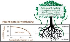Fate of Cd in Agricultural Soils: A Stable Isotope Approach to Anthropogenic Impact, Soil Formation, and Soil-Plant Cycling