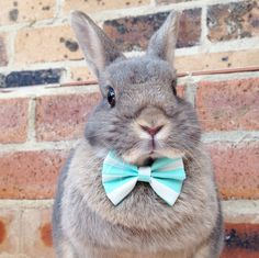 Stripy teal candy bow tie rabbit bow ties bunny by HealthyNibbles #EtsyRabbits