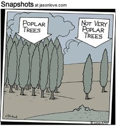 Esp. funny since my hometown is known for it's abundan Poplar trees, LOL!