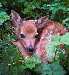 """5,788 Likes, 35 Comments - National Park Service (@nationalparkservice) on Instagram: """"Fawns are born nearly scentless and their spots act as camouflage - both adaptations to protect…"""""""