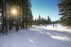 Photographer in Snowy Forest Taking Winter Photos Free Photos, Free Stock Photos, Image Sites, Stock Photo Sites, Destinations, Snowy Forest, Ski Slopes, Winter Photos, Far Away