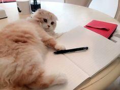 デレデレ猫さん : 舟山久美子(くみっきー) 公式ブログ