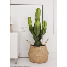 Cactus - frenchyfancy indoor cactus plants, plants on balcony, plants in . Indoor Cactus Plants, Balcony Plants, Balcony Garden, Cacti, Potted Plants, Planet Decor, Decorating Tips, Interior Decorating, Container Gardening
