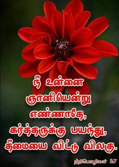 Bible Quotes, Bible Verses, Bible Words Images, Tamil Bible, Bible Verse Wallpaper, Christ, Religion, Blessed, English