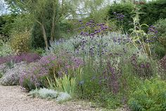Beth Chatto Gardens[ gravel garden]