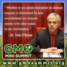 Is there a connection between GMOs and gluten intolerance? Jeffrey Smith interviews Dr. Tom O'bryan and other leading GMO experts in the GMO Mini-Summit October 25-27, 2013;  Listen for free & get empowered.