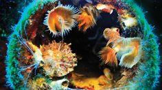 Din l-Art Ħelwa underwater photography competition: Matthew Farrugia's Fan Worms on the Um El Faroud