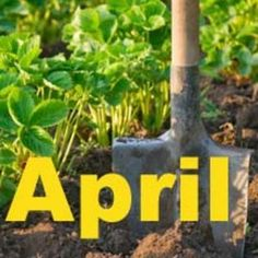 1000 images about april gardening on pinterest in the for Gardening jobs for april