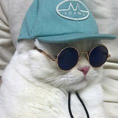"spiirt: ""Some cats in some funky sunglasses "" Cute Cats And Kittens, Cool Cats, Kittens Cutest, Cute Cat Wallpaper, Cute Disney Wallpaper, Funny Cats, Funny Animals, Cute Animals, Cat Icon"