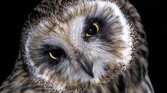 Eläinten vuorokausirytmit ovat kehittyneet erilaisiksi pikkuhiljaa evoluution seurauksena. Kauan sitten eri eläinlajit ikään kuin jakoivat ajan: yhdet ottivat päivävuoron, kun taas toiset valitsivat yövuoron. Sarjassa esitellään yöeläimiä ja selvitetään, mitä eri aisteja ne käyttävät etsiessään ja saalistaessaan ravintoa öisillä retkillään. Biology For Kids, Science And Nature, Beautiful Birds, Face, Geography, Animals, Owls, Friends, Natural