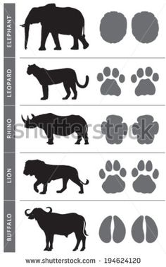 Africa's Big Five Animal Tracks: Elephant, Lion, Leopard, Buffalo and Rhino