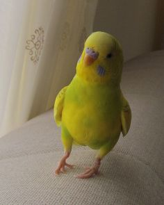 """I am Eksi. I like lettuce and talking when I want to. I like showing off my yellow and green feathers."""