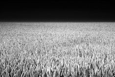 Last week we posted an image collection containing some beautiful black and white portrait photography. This week a friend suggested a collection of black and white landscapes. UPDATE: Learn more about how to take great Black and White Landscapes and Portraits with our new Guide to Black and White Photography. At first I was a … #LandscapeBlackAndWhite