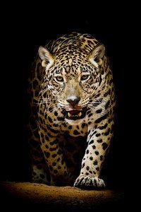 580 Best Animals Hd Wallpapers On Page 4 Binatang Binatang