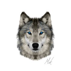 Wolves are romantic creatures. Beautiful Wolves, Animals Beautiful, Wolf Pictures, Animal Pictures, Wolf Tattoo Design, Tattoo Wolf, Animals And Pets, Cute Animals, Wolf Husky