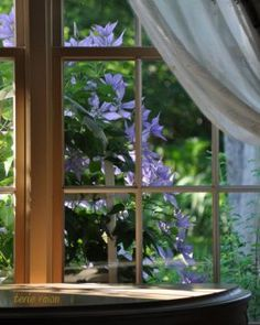 Terie's photo. Clematis seen from an inside window view...up close and personal!