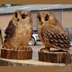 A small tawny owl such as this will cost around £145