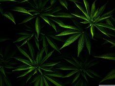 Weed Wallpaper Full HD [2800x2100] - Free wallpaper full hd 1080p ...