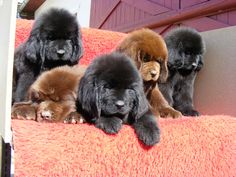 I want to be the luckiest puppy owner with all these velvet #puppies.