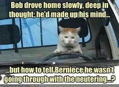 Bob drive home slowly...