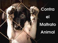 La Guardia Civil anima, en su canal oficial de Twitter, a denunciar el maltrato animal