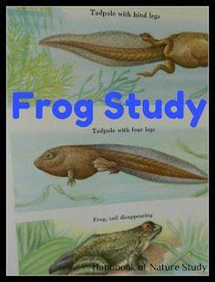 Outdoor Hour Challenge – Frog Nature Study
