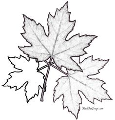 Fall Printables for classroom craft coloring projects :) - Classroom Crafts and Ideas Fall Coloring Sheets, Leaf Coloring, Colouring Pages, Adult Coloring Pages, Coloring Books, Printable Leaves, Free Printable, Classroom Crafts, Calla Lilies
