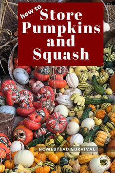 The best way to store squash and pumpkins whole. Preserve whole squash so they taste fresh months later. #pumpkins #foodstorage #preserve #coldroom #pantry Tidy Kitchen, Kitchen Hacks, Canning Jars, Canning Recipes, How To Make Sauce, Smoked Fish, Fish And Meat, Emergency Food, Dehydrated Food