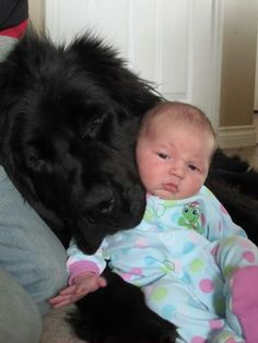 Giant newfoundland dog with little baby
