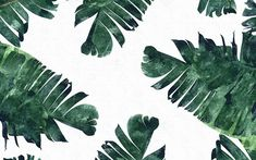 banana leaves laptop background | banana-leaf - Vancouver Mom