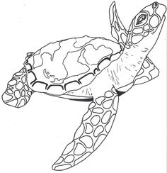 Gallery For gt Sea Turtle Outline Tattoo