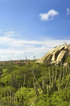 Better Than the Beach? The Top 5 Things to Do in Aruba - Lying in temperate south Caribbean waters is the highly-coveted island of Aruba. With its beautiful white sand beaches and perfect year-round weather, it's no surprise that the spot is a popular holiday destination for millions of people around the world.