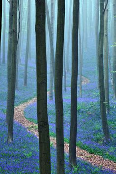The Blue Forest, Belgium