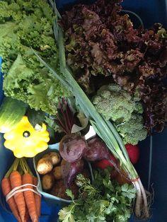 Locally grown veggies.