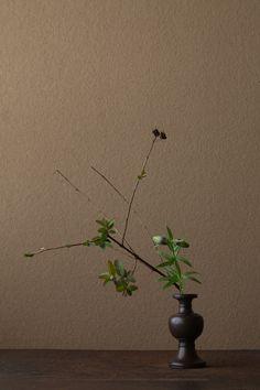 2012年5月1日(火) 黒百合はもう初夏の花です。 花=金糸梅(キンシバイ)、黒百合(クロユリ) 器=古銅亜字形華瓶(鎌倉時代)