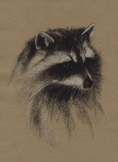 Racoon, Artist Sean Briggs producing a sketch a day, prints available at https://www.etsy.com/uk/shop/SketchyLife #art #drawing #http://etsy.me/1rARc0J #racoon
