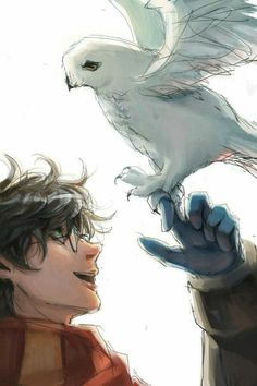 Harry Potter - Harry and Hedwig