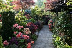 Spring azalea flowers along the pagoda pathway | Flickr - Photo Sharing!