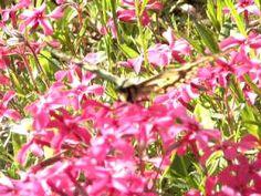 ritariparhonen229.AVI kesään aika heinä kuussa lentävät parhoiset tämän videon näyttää kaikielle luonto ystäville