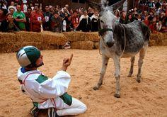 Donkey Palio of Alba (Piedmont) #festivals #events #piemonte #italy #provinciadicuneo