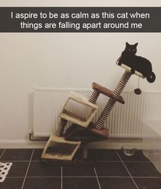 26  Hilarious Cat Snapchats That Need to Be Treasured Forever | BlazePress