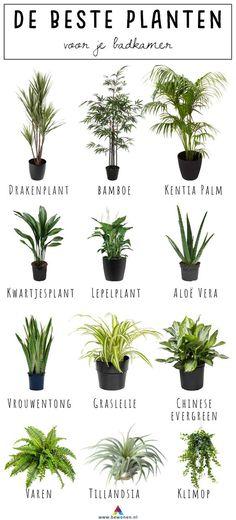 de beste planten voor je badkamer Totally hot: plants in your bathroom. But which plants are doing well there? Read which 12 plants are best placed in your bathroom!