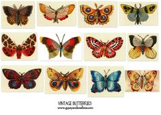 Image detail for -Vintage Butterflies #1