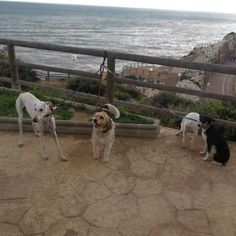 #Paseo con #Lia #Yuna #Max #Robin 03/18   * * #Peludos #Disfrutar #enjoying #enjoy #disfrutamos #Disfrutandoeldía #DisfrutandoAndo #Fotos #fotografia #photography #Foto #Photo #Mascotas #Mascottes #Pets #Mascot #Dogs #Shaggy #Furry #Hairy #Ilovedog #Dog #Gatos #Cats #gato #Ilovecats #Noalabandono #adoptanocompres #RincóndelaVictoria