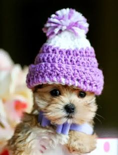 5 Cutest Teacup puppies you have ever seen. http://www.bigchad.myitworks.com/