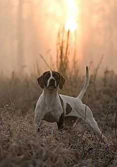 beautiful pointer!
